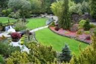 Świdośliwa świetnie nadaje się zarówno na naturalne szpalery lub wyższe żywopłoty, jak i na pojedynczy akcent w ogrodzie.