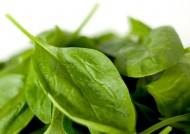 Szpinak jest wytrzymały na przymrozki, szybko rośnie i jest źródłem wielu witamin. Można go wysiewać i zbierać kilka razy w roku.