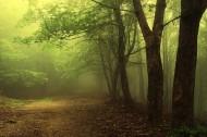 stawki opłat za usunięcie drzew i krzewów oraz stawki kar za zniszczenie zieleni na rok 2012